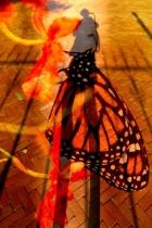 9-jacqui-vlinder